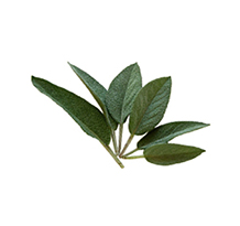 Salvia biodinamica e biologica